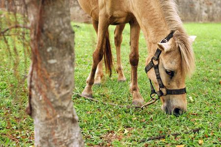 Horse tied up Stock Photo - 3104718