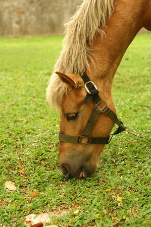 Horse tied up Stock Photo - 3104716