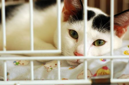 Bored Kitty In Cage Stock Photo - 3570840
