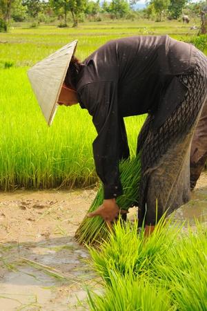 third world economy: Thai farmer working on field