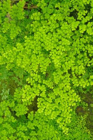 bush to grow up: Green ferns patern in rainforest.