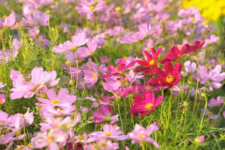 Field of colorful flowers in the garden. photo