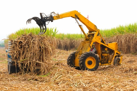 agricultural machinery: Harvest sugarcane in Thailand