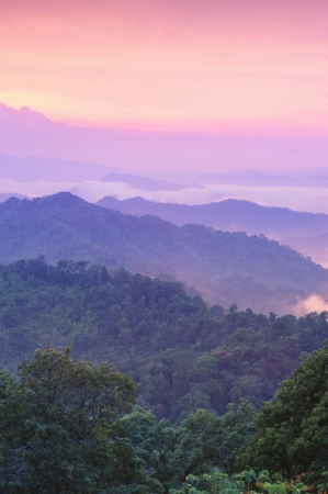 Beautiful twilight landscape in rain forest, Thailand  photo