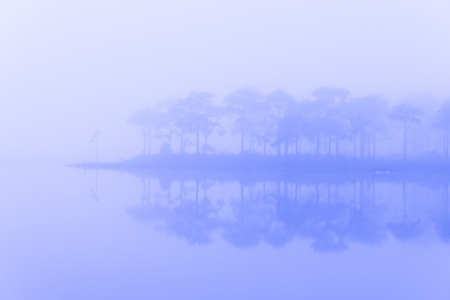 traditionally dutch: Abstract foggy landscape in rand forest, Thailand