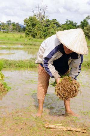 Thai farmer working on field  photo