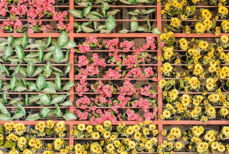 transplants: The hanging planter adorned a multi of colors in outdoor