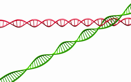 3d render ,Model of twisted DNA chain isolated on white background High resolution