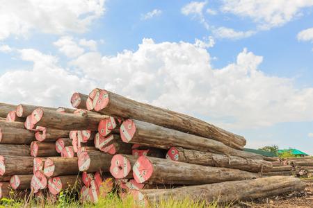 Big Padauk timber storage yaed for raw material.