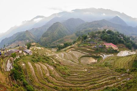 Rice fields on terraced in Sapa, Vietnam. photo