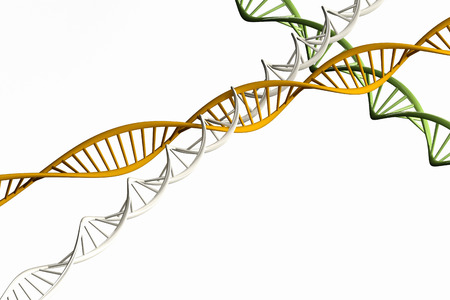 genomes: 3d render Model of twisted DNA chain isolated on white background High resolution.