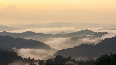 nature: Beautiful tropical mountain mist in rain forest, Thailand.