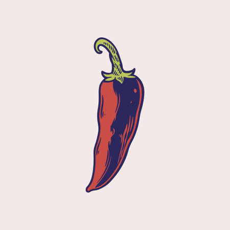 Chili Pepper hand drawn vector illustration. Vegetable engraved style object. Detailed vegetarian food drawing. Chili pepper, spice, traditional ingredient of Mexican cuisine. Farm market product