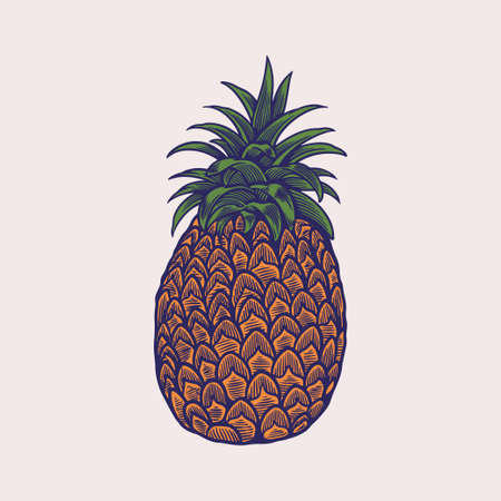Hand drawn sketch style illustrations of ripe pineapples. Exotic tropical fruit vector drawings isolated on white background