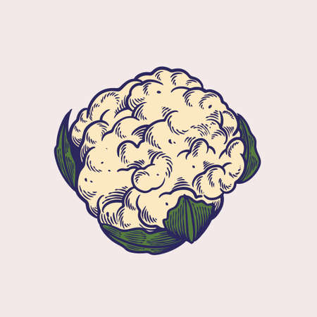 Sketch of cauliflower hand drawn vector illustrations. Organic vegetables for vegetarian, vegan or veggie food. Farming and garden, vitamin and nutrition theme. Vegetable engraved style objects