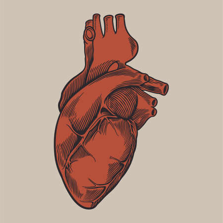 Human heart anatomically hand drawn art vintage engraving colorful red. Healthy medicine concept design for your tattoo, poster or other. Vector sketch outline drawing illustration Vektorgrafik