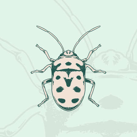 Hand drawn of ladybug Sketch Symbol. Vector Ladybird Element In Trendy vintage Style.