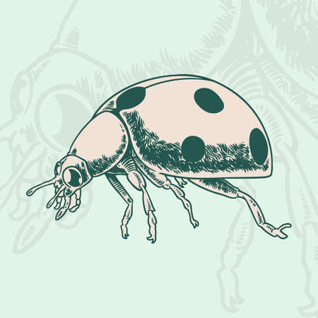 Hand drawn beetle. Vintage insect for design, icons, logo or print. Hand drawing illustration for Halloween