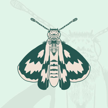 Hand drawn drawing of a Moth coloring book design. Ink drawing, graphic style. Beautiful design elements. Vintage style.