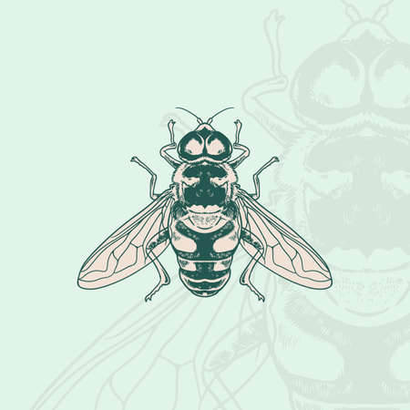 Honey bee Hand drawn engraving vintage style white background. Suitable for Creative Industry, Multimedia, entertainment, Educations, Shop, and any related business Ilustracja