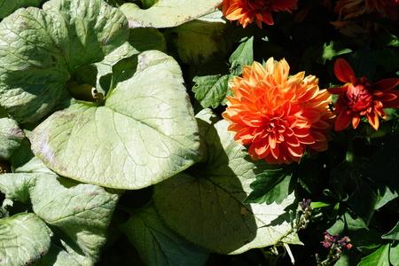 Romantic Beautiful Flowers in Garden