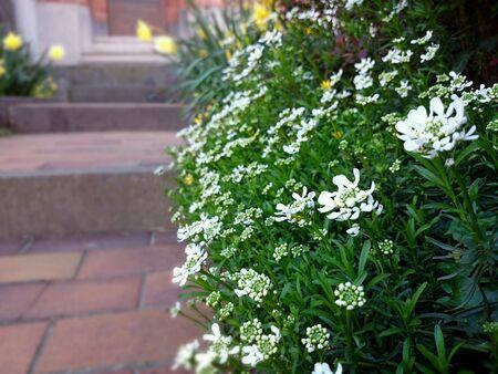 doorstep: White flowers at the doorstep Stock Photo