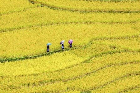 The rice terrace fields in La Pan Tan, Mu Cang Chai, Viet Nam
