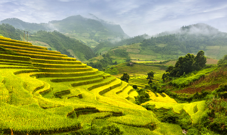 recognized: The rice terrace in La Pan Tan fields, Mu Cang Chai was recognized companies by the national Ministry of Culture Landscapes, Sports and Tourism. Stock Photo