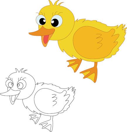 webbed: Illustraiton of duckling chicks on white