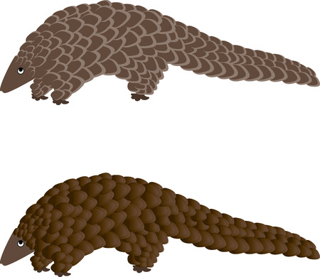 scaly: Pangolin or scaly anteater