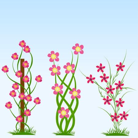 chive: Spring flower