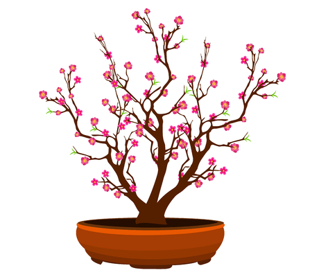 Cherry blossom for Chinese New Year and lunar new year