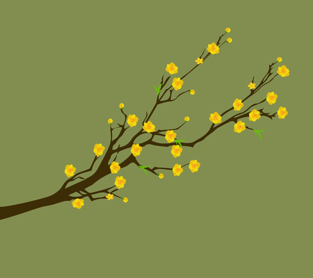 lunar new year: Yellow Apricot Flower, traditional lunar new year in Vietnam