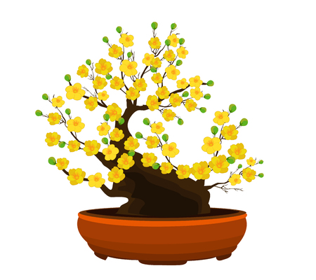 ethnicity happy: Yellow Apricot Flower, traditional lunar new year in Vietnam