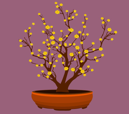 japanese ethnicity: Yellow Apricot Flower, traditional lunar new year in Vietnam