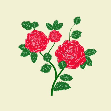 Red and pink roses. illustration