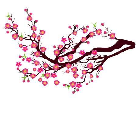 Vector Kersenbloesem voor Chinees Nieuwjaar en maan nieuwjaar