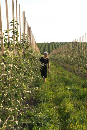 Young man farmer walking among his apples garden and checking condition of trees