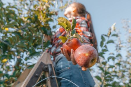 young girl in glasses with a ponytail on her head holds a red apple in her hand, plucks the autumn harvest on a tree