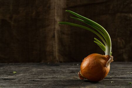 Close up photo of a green organic onion on the wooden table, bagging background