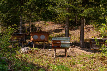 Small apiary with colorful bee hives in mountains Standard-Bild