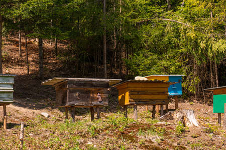 Mountain honey. Traditional beekeeping in the pine Forest