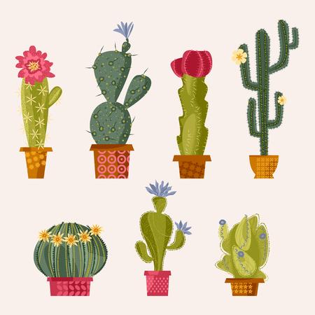 Set of various blooming cacti