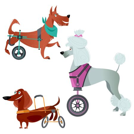 Set of three dogs with special needs on different wheelchairs. Vector illustration