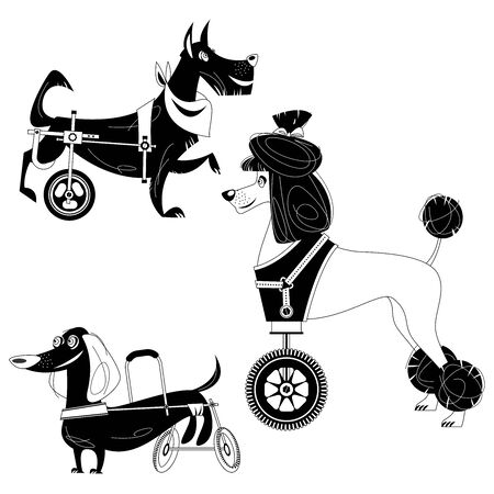 Set of three dogs with special needs on different wheelchairs. Black and white. Vector illustration Ilustração