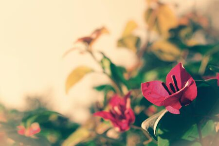 colored backgound: filtered flower