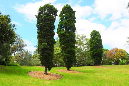 hyde: Three trees. Hyde Park, Sydney
