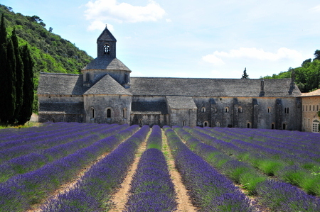 senanque: Abbaye de Senanque and lavender field  Provence, France