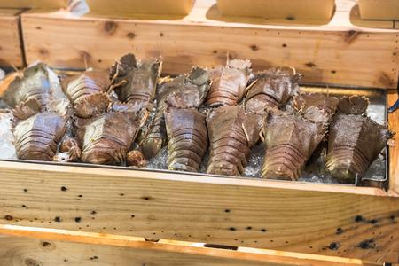 flathead: flathead robster