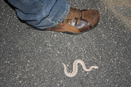 Serpiente de cascabel Sidewinder junto al zapato